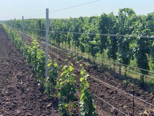 Vinohradnický drát převíjený / ZN + AL / 25kg